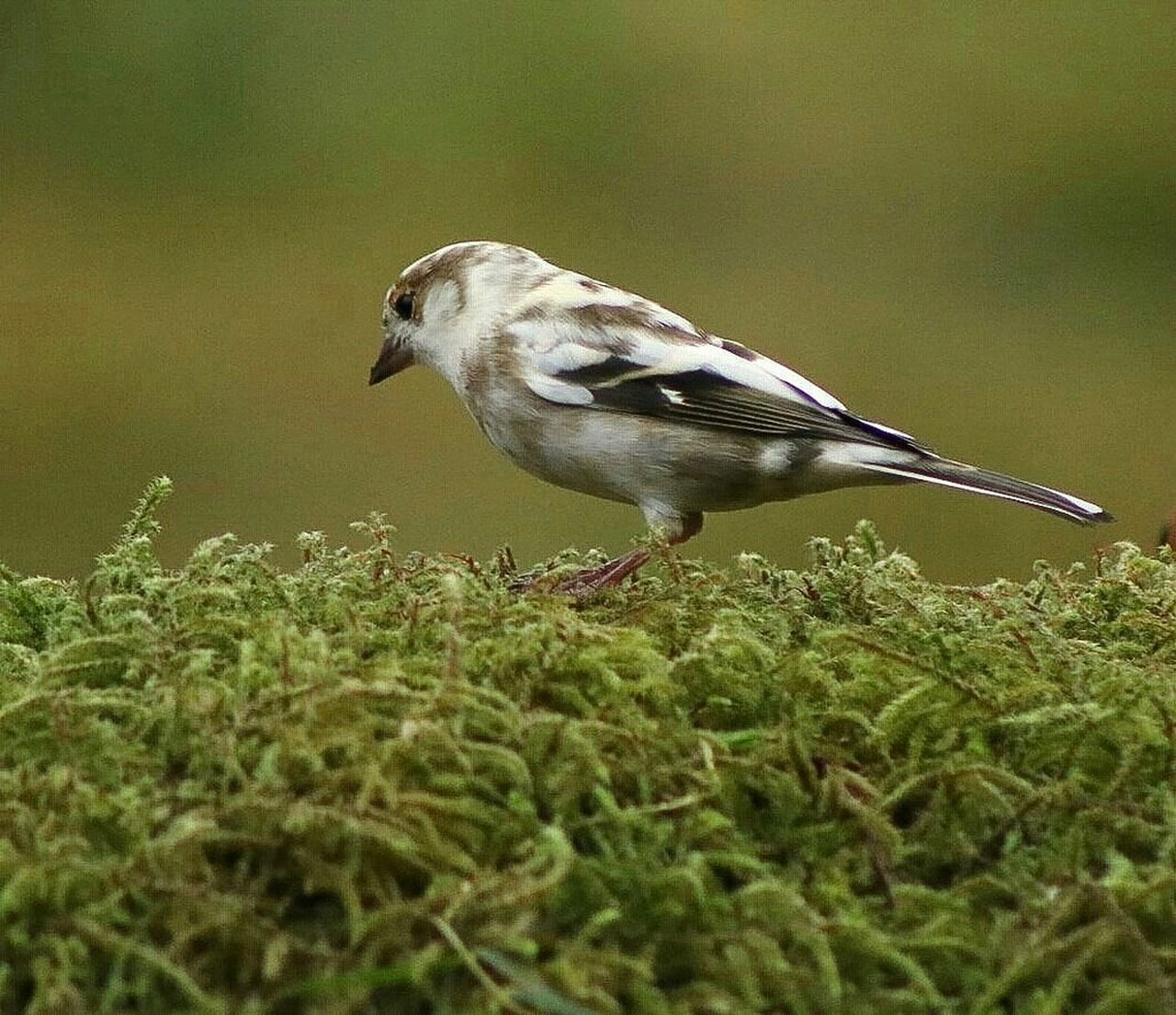 one animal, animal themes, bird, animals in the wild, animal wildlife, day, no people, outdoors, close-up, perching, nature, sparrow