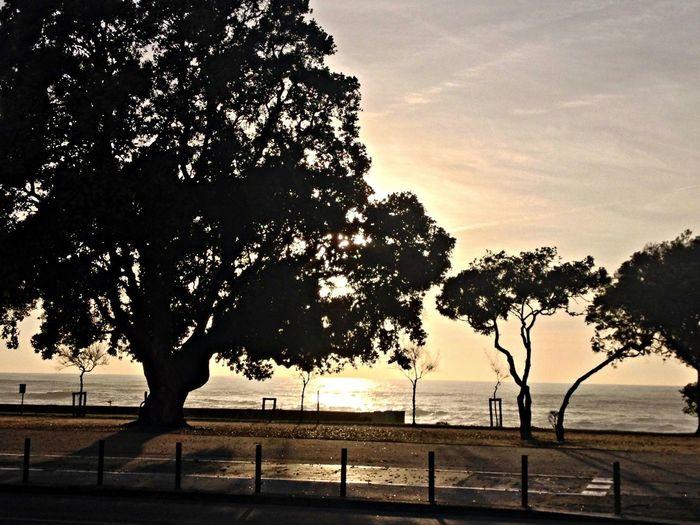 EyeEm Porto Seaside Sunset Taking Photos