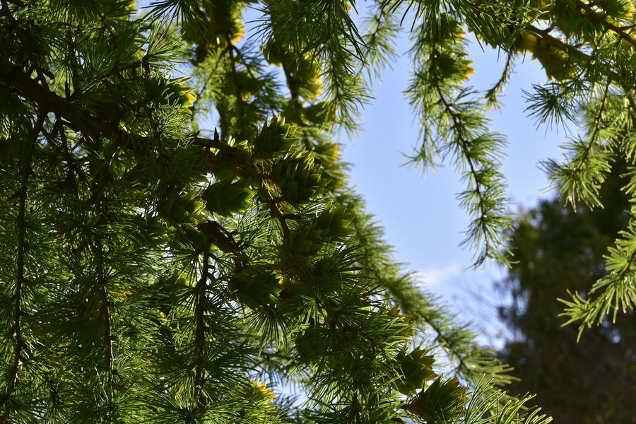 Backgrounds Beauty In Nature Beth Chato Gardens Branch Close-up Day Elmstead Market Essex Green Color Growth Horizontal Low Angle View Lush - Description Nature No People Outdoors Seed Sky Tree