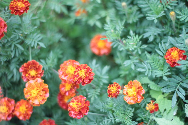 Close-up of flowering plants