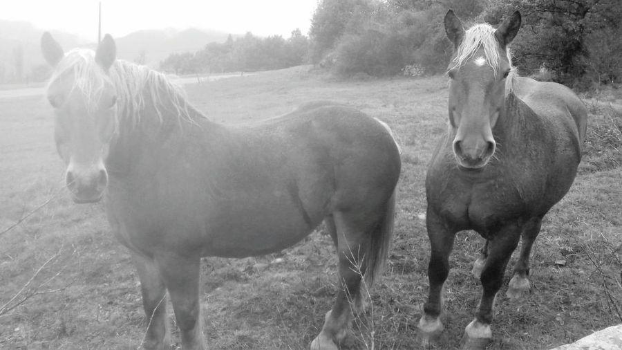 Tree Rural Scene Agriculture Horse Livestock Landscape