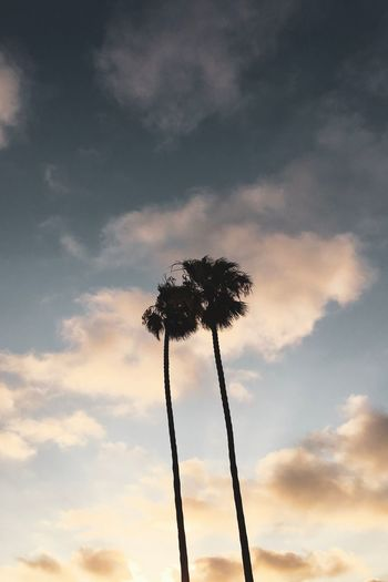 Palm trees Surf