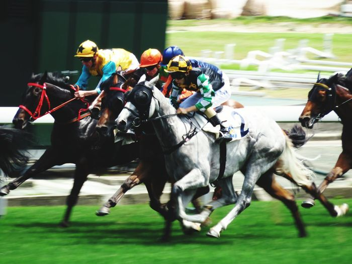 Horseracing Horserace Shatinracecourse Topspeed Photography In Motion