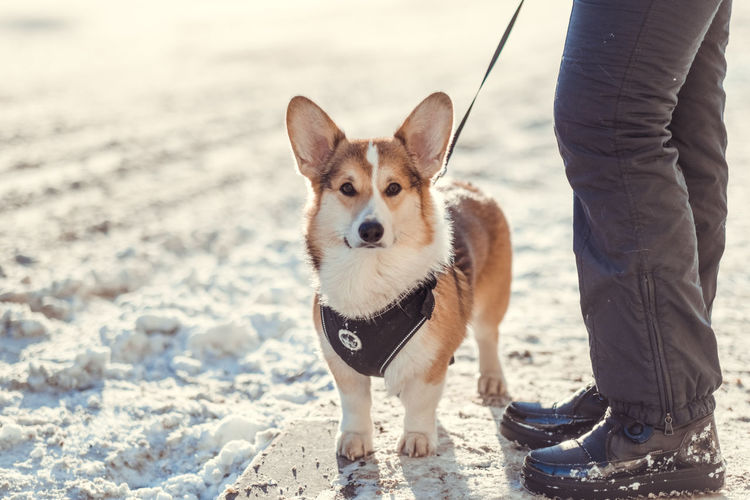One Animal Pets Canine Dog Domestic Domestic Animals Mammal Pet Leash Leash Vertebrate Real People Standing One Person Low Section Looking At Camera Day Pet Owner Outdoors Small Springtime Spring Love Friendship
