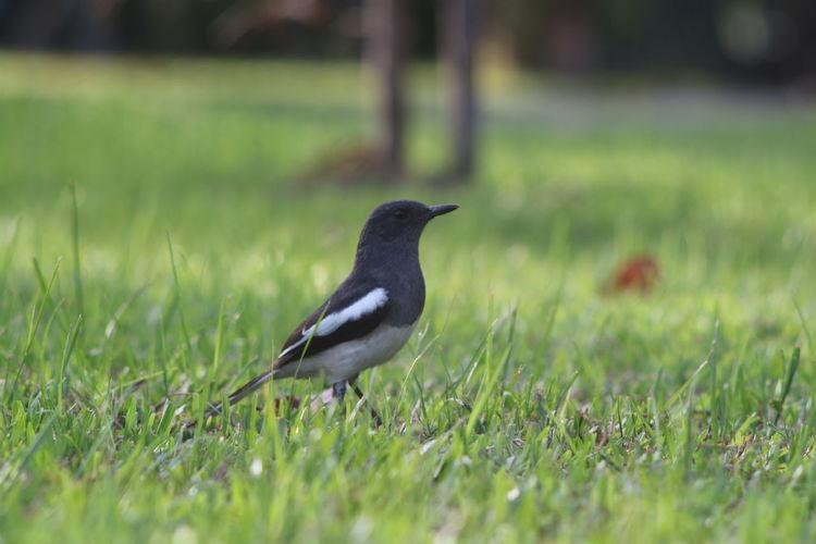 Bird Black