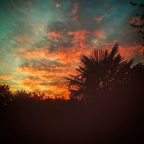 Sun Sunset Night Palm Trees Nightphotography Nexus5 OpenEdit Photooftheday