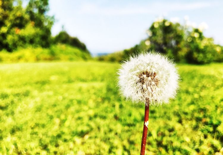 Flower Flower Nature Fragility Plant Green Color Outdoors Close-up Grass Aummer
