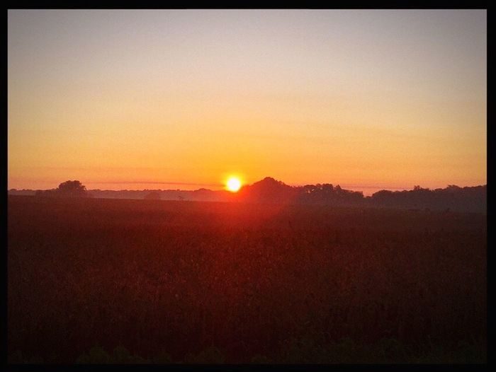 Sun Sunrise Sunshine Wheat Field Hazy  Landscape Bright Nature Tranquil Scene No People Tranquility Silhouette Beauty In Nature Scenics Outdoors Clear Sky Scenery Sky Fog Foggy Morning Foggy Field Beauty In Nature Indiana Harmony Horizon EyeEmNewHere