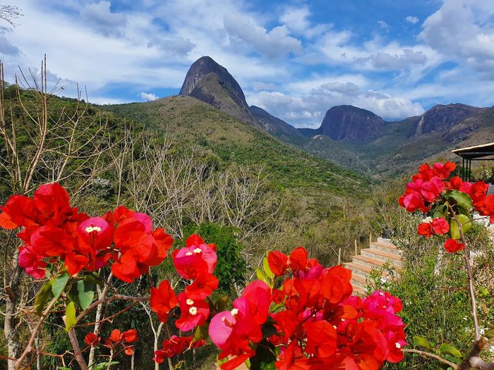 Red flowering plants by mountains against sky
