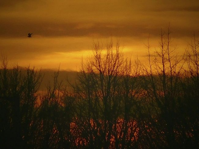 Sunset_collection Dusk In The City Decembergold Decemberchallenge Orange Sky Norfolk Uk Nikonphotographer Goodbyesun Hello Night Fly Home Bird