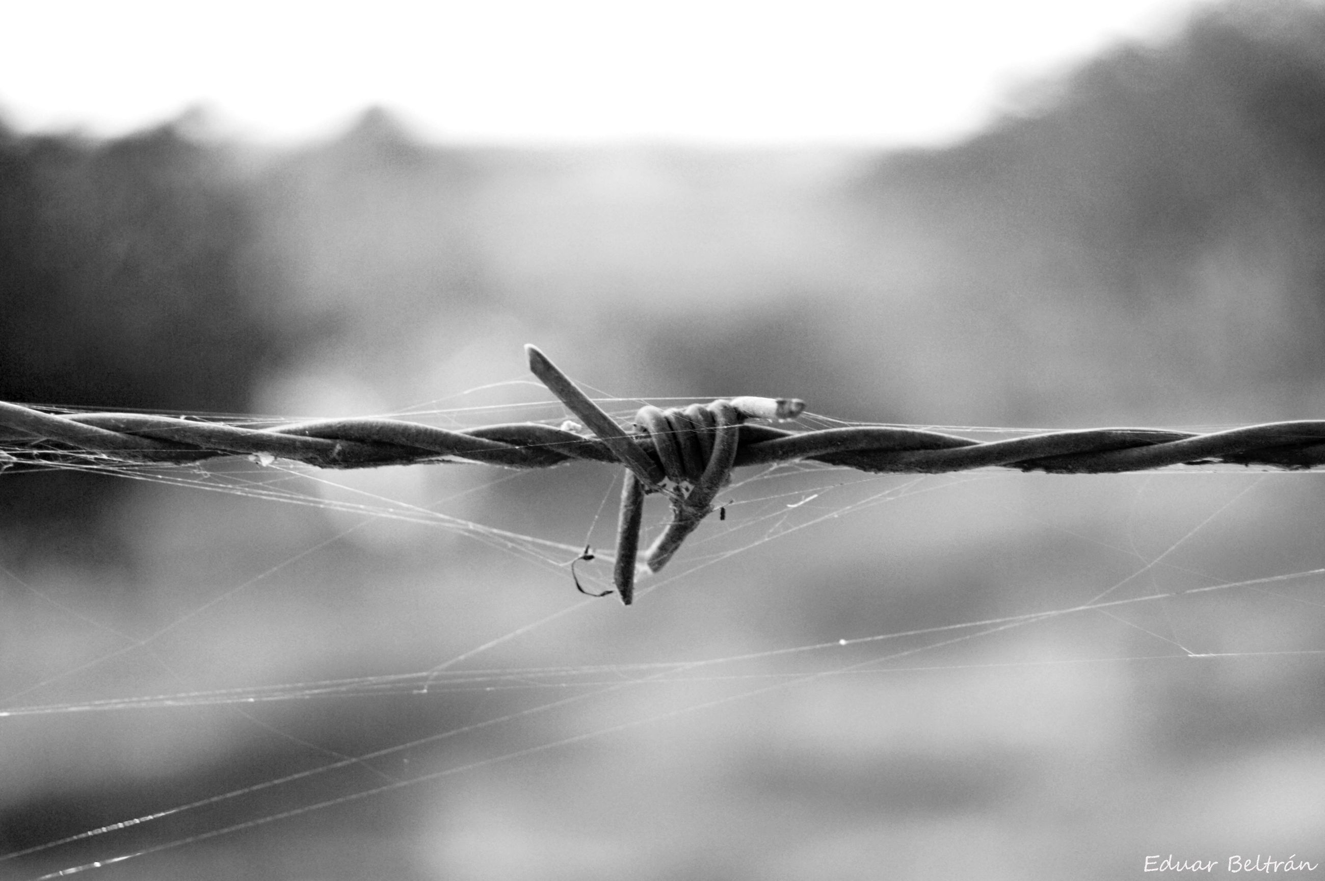 focus on foreground, close-up, barbed wire, nature, selective focus, outdoors, day, twig, plant, sharp, no people, tranquility, beauty in nature, sky, detail