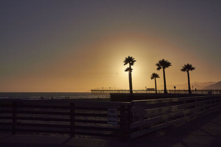 Pismo Beach at sunset Beach Beauty In Nature Clear Sky Day Horizon Over Water Nature No People Outdoors Palm Tree Scenics Sea Silhouette Sky Sunset Tranquil Scene Tranquility Tree Water California Dreamin The Great Outdoors - 2018 EyeEm Awards