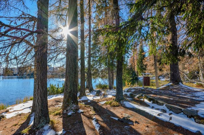 The morning sun Slovakia Tatras Strbske Pleso Tree Sun Nature Landscape Water No People Winter Snow Cold Temperature Hiking Beauty In Nature Lake Forest Sunlight Beauty Of Slovakia Mountain