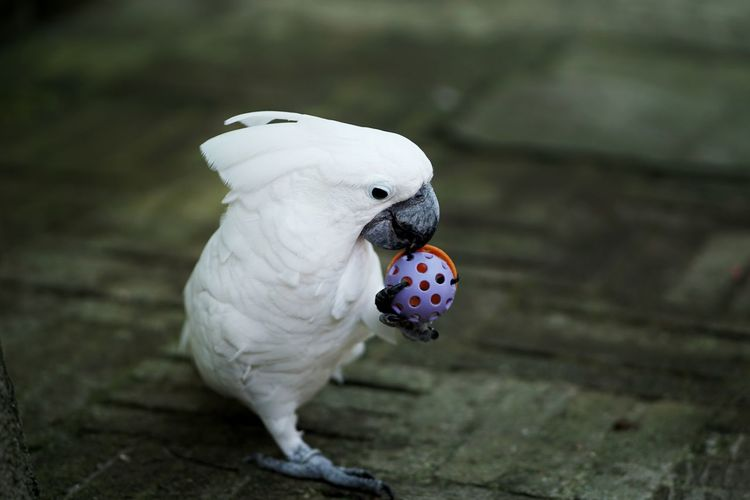 Close-up of parrot playing with toy