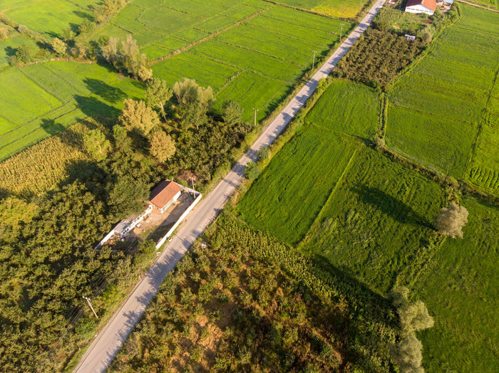 High angle view of the green fields and trees and the road. Landscape Agriculture Rural Scene Environment Land Field Growth Farm Scenics - Nature Plant Nature Green Color Tranquil Scene Beauty In Nature Tree Tranquility No People Outdoors Plantation Aerial View High Angle View Road Day