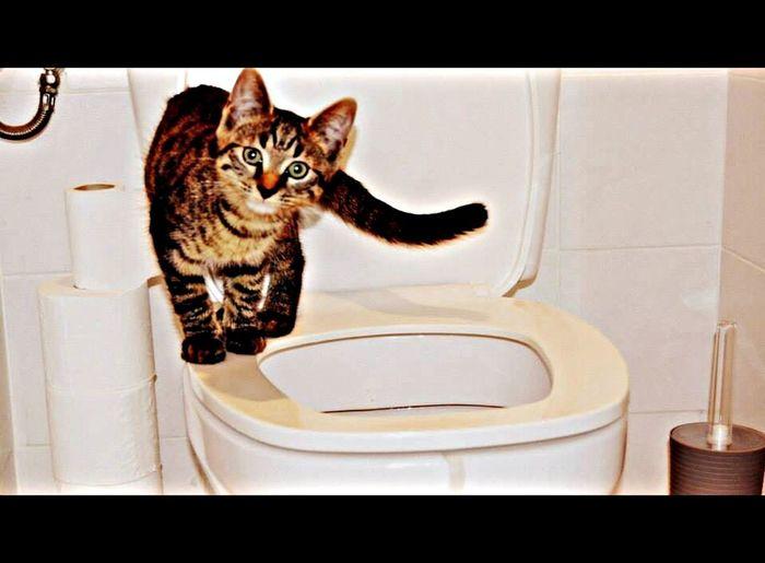 C'est plutôt coul les wc pour de poser non? Taking Photos Hello World Animaux Chaton