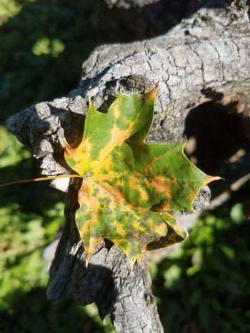 Fall leaves autumn sunshine