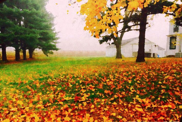 Full frame of leaves on tree