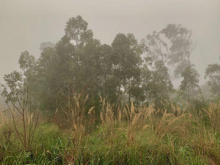 Plant Tree Fog