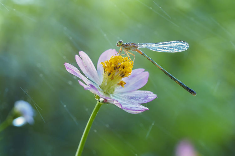 Animal Animal Themes Animal Wildlife Animal Wing Animals In The Wild Beauty In Nature Butterfly - Insect Close-up Flower Flower Head Flowering Plant Fragility Freshness Growth Insect Invertebrate Nature No People One Animal Petal Plant Pollination Purple Vulnerability