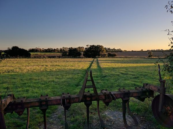 a crispy sunset Tree Rural Scene Agriculture Field Rice Paddy Crop  Farm Sky Landscape