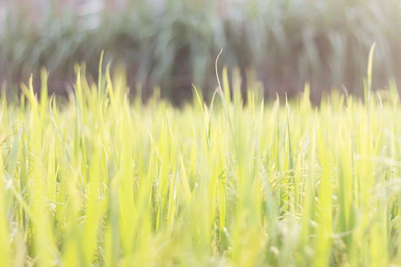 Growth Plant Field Land Beauty In Nature Agriculture Nature