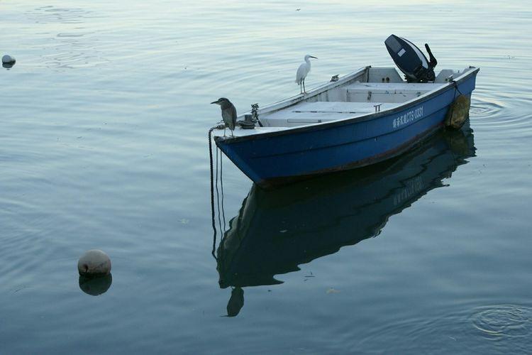 同船翼夢Fishing Boat Quality Times Peace And Quiet Water Reflections Birds Getting In Touch Animals Ships Fishing Village