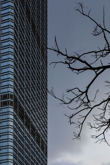 Bare Tree and Skyscraper Branches Architecture Bare Braches Bare Tree Building Exterior Built Structure City Corporate Business Day Growth High Low Angle View Modern No People Outdoors Sky Skyscraper Tree