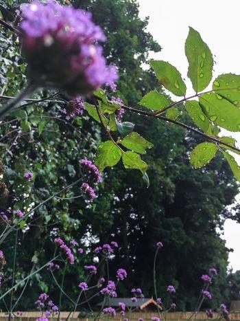 Drip drip drop... IPhoneography Raindrops Nature The Week On EyeEm