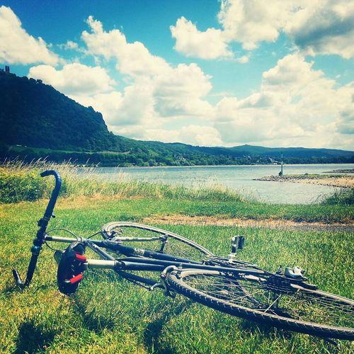 Bikeride Eddy Merckx Cruising Rhine Area Rheinufer Rheinaue Chilling Holiday Season Summertime