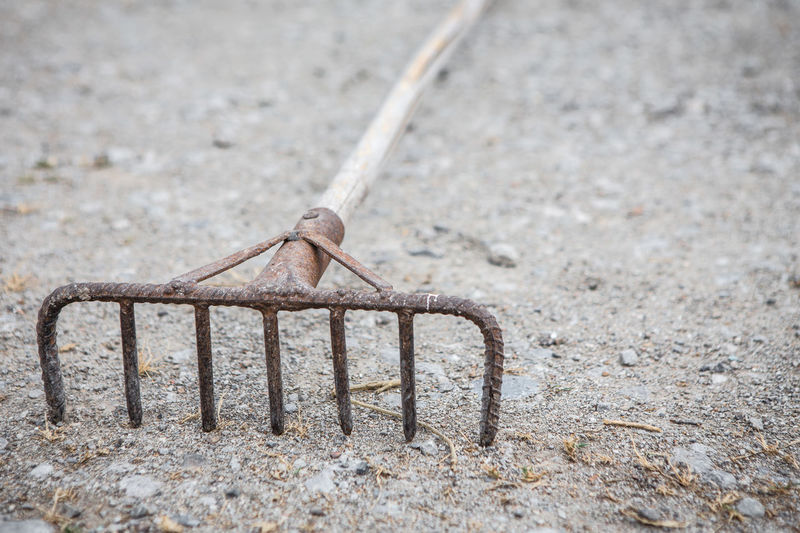 The rake is rusty with piles of dry branches on the floor in the farm Metal No People Day Focus On Foreground Outdoors Rusty Animal Themes Animal Close-up One Animal Invertebrate Animal Wildlife Selective Focus Animals In The Wild Nature Land Insect Dirt Connection Wood - Material Concrete Rake Piles Of Wood Floor Farm