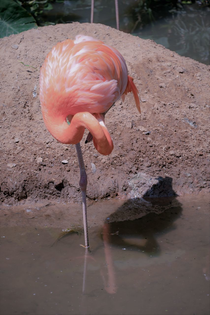 VIEW OF A BIRD DRINKING WATER FROM A YOUNG