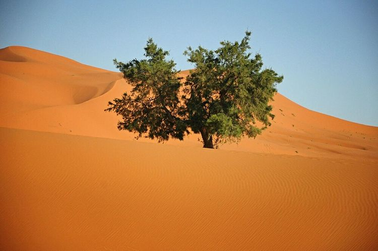Desert Tree Lonely Life How Do You See Climate Change? RePicture Growth Beauty In Nature Desert Beauty Deserts Around The World Beautiful Nature TreePorn Tree_collection  Landscapes With WhiteWall