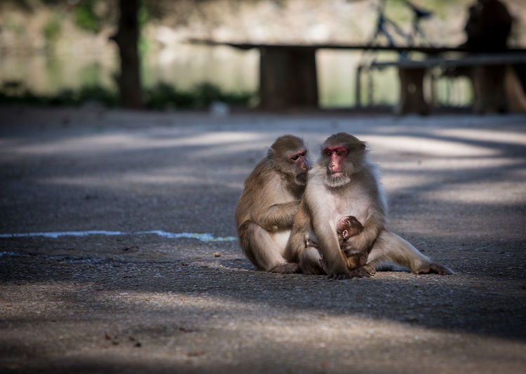 Close-up of monkeys on street
