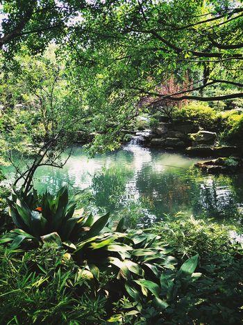 Chengdu China Beauty In Nature Freshness Outdoors Nature Beauty In Nature Plant No People
