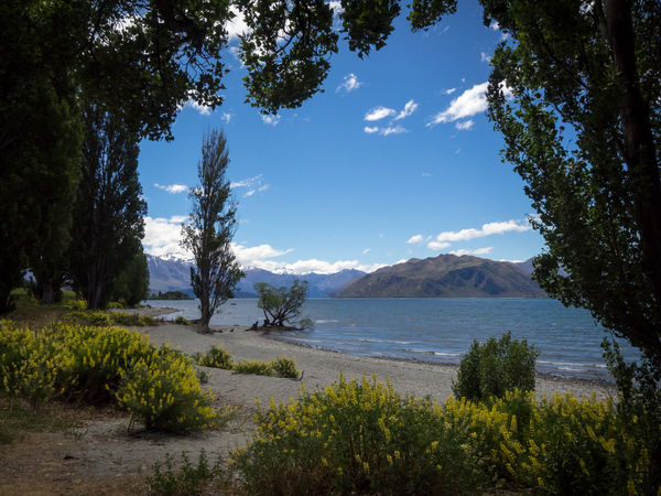 Camping Discover Your City Nature New Zealand Beauty New Zealand Landscape Wanaka Attraction Beauty In Nature Day Discovery Grass Growth Lake Lakeshore Landscape Mountain Mountain Range Nature New Zealand No People Outdoors Scenics Sky Tourism Tourist Destination Tranquil Scene Tranquility Tree Wanakalake Water