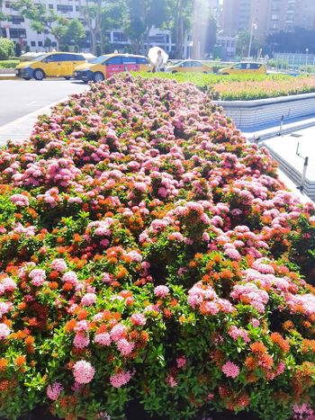 Summer In The City Flower Head Flower Water Car Plant In Bloom Blooming Hydrangea Plant Life Blossom Petal