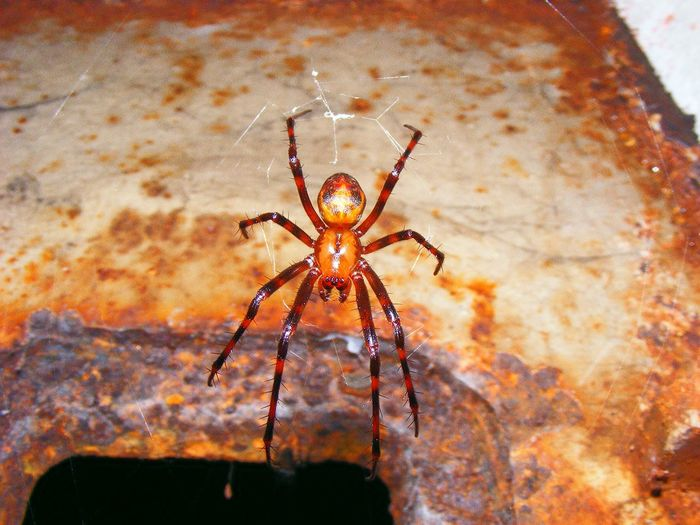 Spider Spider Web One Animal Animals In The Wild Animal Themes Insect No People Animal Wildlife Close-up Animal Leg Day Outdoors Fragility Nature Bunker Maginot Line Ouvrage Saint Roch Maginot Line France Frankreich Nature