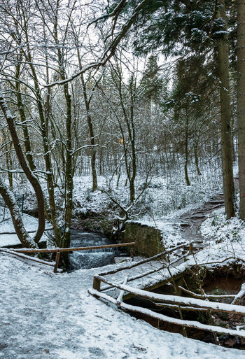 Trees by stream in forest during winter