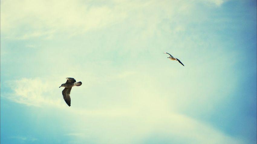 Fly fly fly away.. Supernormal Bird Photography Love To Take Photos :)  EyeEm Bird Lover