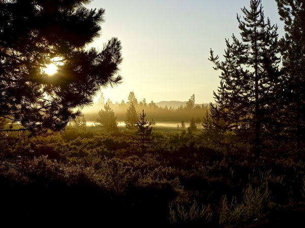 Beauty In Nature Day Field Forest Growth Landscape Nature No People Outdoors Pine Woodland Scenics Silhouette Sky Sunlight Sunrise Tranquil Scene Tranquility Tree