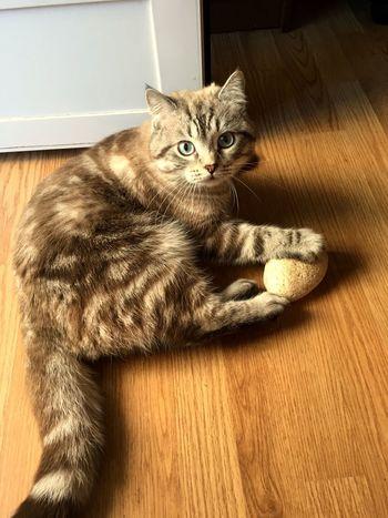 Domestic Cat Pets Domestic Animals Feline Animal Themes Cat Indoors  EyeEm Best Shots