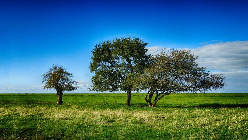 Family tree.😀GreenScenes Treetastic TreePorn Open Edit Simplicity Nature_collection EyeEm Nature Lover Dutch Landscape Eye4photography