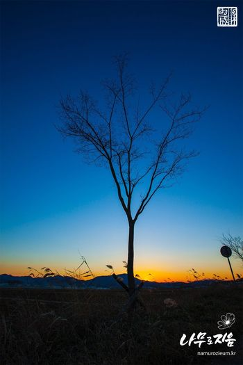 Sunset Sky Bare Tree Blue Text Tree Clear Sky Tranquility Outdoors Nature Branch Tranquil Scene Communication Beauty In Nature No People Scenics Tree Trunk Landscape Day