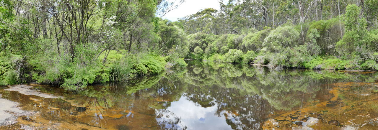 Australia Australian Landscape Bush Green Nature Nature Travel Reflection Reflections In The Water River Serinity Water EyeEmNewHere New South Wales  Australian Bush Travel Photography Outdoors The Great Outdoors - 2017 EyeEm Awards