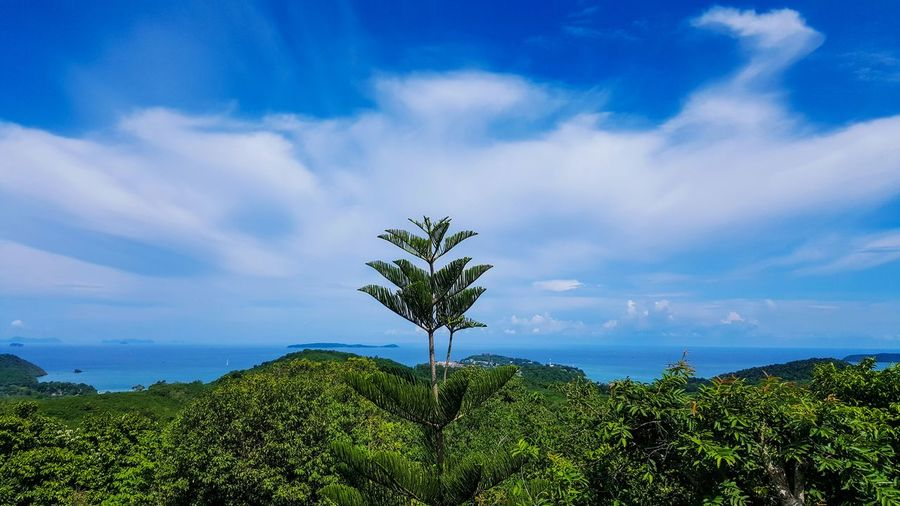 Stunning seaview with greenery mountain. Tropical Climate Tropical Phuket Thailand Phuket,Thailand Island Top View Top Fresh Fresh Air... Clean Summer Honeymoon Tourism Flower Tree Flower Head Water Beauty Blue Sunlight Sky Close-up Landscape Plant Life Botanical Garden Succulent Plant Botany Prickly Pear Cactus Wildflower
