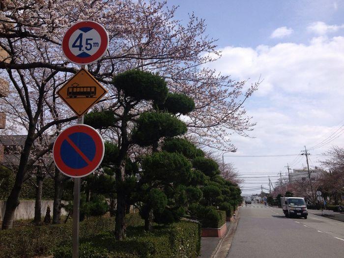 Sakura #nofilter#noedit