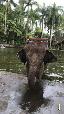 Animal Themes Day Elephant Nature No People Palm Tree Tree Water