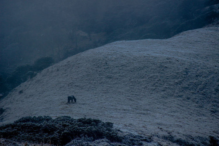 Sandakphu Phalut Trek Horses Ice Adventure Animal Themes Beauty In Nature Day High Angle View Horse Photography  Landscape Mammal Mountain Nature One Animal One Person Outdoors People Real People Scenics Water Winter