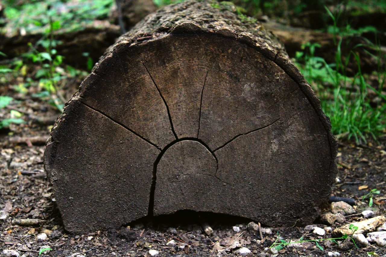 CLOSE-UP OF TREE STUMP IN FIELD
